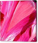 Hot Pink Acrylic Print by Rona Black