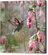 Hummingbird Heaven Acrylic Print by Angie Vogel