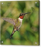 Hummingbird In Flight Acrylic Print by Sandy Keeton