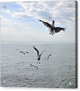 Hungry Seagulls Flying In The Air Acrylic Print by Matthias Hauser