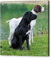 Hunting Dogs 1 Acrylic Print by Rachel Munoz Striggow