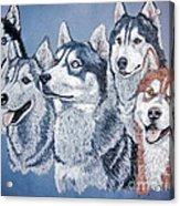 Huskies By J. Belter Garfunkel Acrylic Print by Sheldon Kralstein