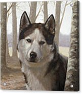 Husky In The Woods Acrylic Print by John Silver