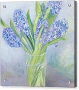 Hyacinths Acrylic Print by Sophia Elliot