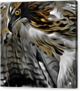 I Am Redtail Square Acrylic Print by Bill Wakeley