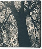 I Can't Describe Acrylic Print by Laurie Search