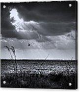 I Fly Away Acrylic Print by Marvin Spates