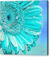 Ice Blue Acrylic Print by Carol Lynch