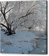 Ice Covered Tree And Creek In Montana Acrylic Print by Bruce Gourley