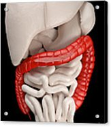 Illustration Of Digestive System Acrylic Print by David Marchal