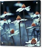 Imagine F03a Acrylic Print by Variance Collections