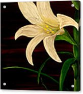 In Bloom Acrylic Print by Mark Moore