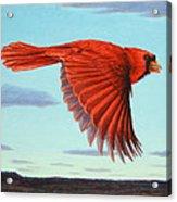 In Flight Acrylic Print by James W Johnson