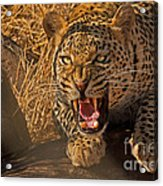 In No Uncertain Terms Acrylic Print by Ashley Vincent