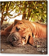 In The Shade Acrylic Print by Jane Rix