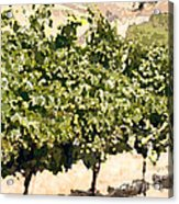In The Vineyard Acrylic Print by Artist and Photographer Laura Wrede