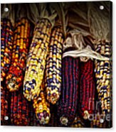 Indian Corn Acrylic Print by Elena Elisseeva