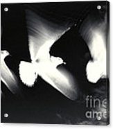 Infrared Gulls Acrylic Print by Jerry McElroy