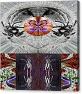 Inspiring Trust Spider - Spirit 2013 Acrylic Print by James Warren
