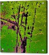 Intermingle Acrylic Print by Tom Druin