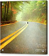 Into The Fog Acrylic Print by Darren Fisher