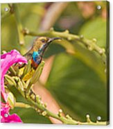 Iridescence On A Curve Acrylic Print by Ashley Vincent