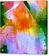 Iris 53 Acrylic Print by Pamela Cooper