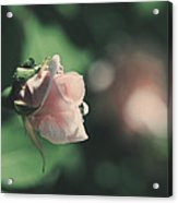 It'll Be Alright Acrylic Print by Laurie Search