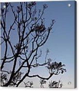 Jacaranda Sunset Acrylic Print by Rona Black
