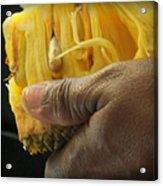 Jamaican Jack Fruit Acrylic Print by Karen Wiles