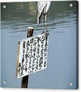 Japanese Waterfowl - Kyoto Japan Acrylic Print by Daniel Hagerman