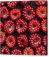 Japanese Wineberry Pattern Acrylic Print by Tim Gainey
