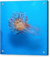 Jelly Fish 5d24944 Acrylic Print by Wingsdomain Art and Photography