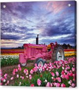 John Deere Pink Acrylic Print by Darren  White