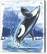 Jumping Orca Acrylic Print by JQ Licensing