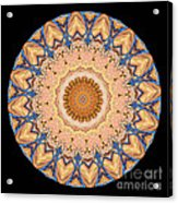 Kaleidoscope Anatomical Illustrations Seriesi Acrylic Print by Amy Cicconi