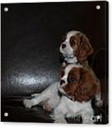 King Charles Puppies Acrylic Print by Dale Powell