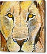 King Acrylic Print by Debi Starr