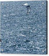 Kite Surfing Acrylic Print by Brian Roscorla
