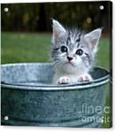 Kitty In A Bucket Acrylic Print by Jt PhotoDesign
