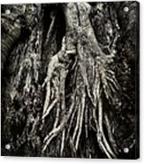 Kneeling At The Feet Of The Green Man Acrylic Print by Rebecca Sherman