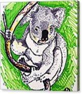 Koala Acrylic Print by Andrea Keating