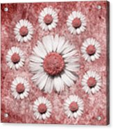 La Ronde Des Marguerites - Pink 02 Acrylic Print by Variance Collections
