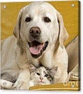 Labrador With Cat Acrylic Print by Jean-Michel Labat