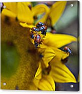 Ladybugs Close Up Acrylic Print by Garry Gay