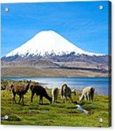 Lake Chungara Chilean Andes Acrylic Print by Kurt Van Wagner