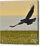 Land Sea And Sky Acrylic Print by Amy Fearn