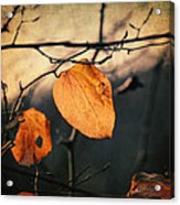 Last Leaves Acrylic Print by Taylan Soyturk