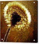 Last Light Of Day Acrylic Print by Bob Orsillo