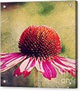 Last Summer Feeling Acrylic Print by Angela Doelling AD DESIGN Photo and PhotoArt